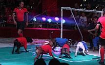 Cirques avec animaux en Corse : Medrano conteste