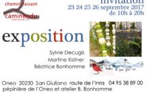 San Giuliano : Caminendu pendant 4 jours à la pépinière Oneo