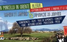 Aleria : Deux jours de fête pour la San Marcellu in Oriente