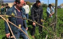 Core in Fronte : Une operata symbolique sur le domaine viticole de Casabianca