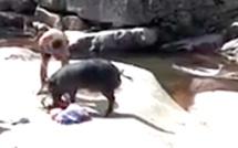 """Vidéo : Un """"nustrale"""" voleur…"""