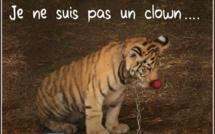 Associations contre les cirques détenant des animaux : Rassemblement à Ghisonaccia