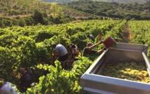 Guillaume Cros : « Les agriculteurs européens doivent pouvoir vivre de leur métier »