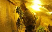 """Stupéfiants : Les gendarmes tentaient d'identifier une personne, ils découvrent une """"chambre de pousse"""""""