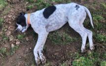 U Mucale : 8 chiens empoisonnés à la strychnine