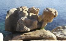La photo du jour : La tortue de l'Isolella