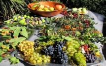 Le CCAS de Calvi organise une sortie au jardin botanique fruitier d'Avapessa