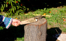 Bastelicaccia : Le rouge-gorge vient lui manger dans la main !