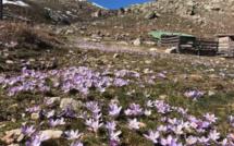 La photo du jour : En randonnée dans le Niolu