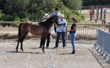 Concours d'élevage au Haras de Tesa à Occhiatana