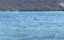 Miomo : on recherche le cadavre d'un dauphin