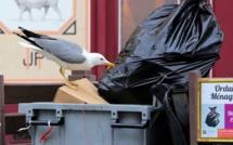 François Sargentini : « Nous n'avons pas de solution miracle pour gérer les déchets pendant la période de transition »