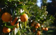 Alternative à i pesticidii : l'Università di Corsica / CNRS, puntellu di a ricerca
