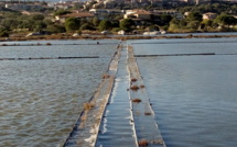 Partez à la découverte des zones humides corses à l'occasion des JMZH 2020 !