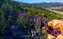 """Le bien-être par les plantes : les infusions naturelles de l'entreprise bastiaise """"Fiora di Vita"""""""