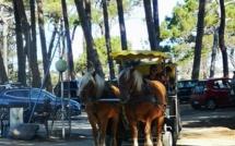 Convoi hippomobile pour le ramassage du  tri sélectif de la plage et de la  pinède de Calvi