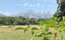 La météo du vendredi 14 août 2020 en Corse