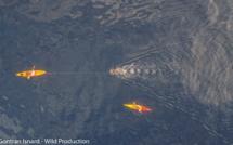 Des nouvelles de Thierry Corbalan, l'homme dauphin corse