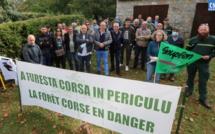 Les syndicats de l'ONF appellent à la création d'un collectif pour la forêt corse