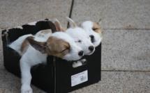 Ajaccio : des chiots dans la poubelle