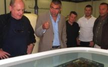 Stella Mare/SITEC : Un partenariat pour innover en milieu marin