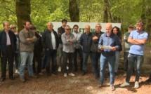 """Territoriales - U Cullettivu per a furesta corsa aux candidats : """"il y a nécessité de se pencher sur l'avenir d'une forêt à l'abandon"""""""