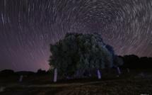 La photo du jour : l'olivier millénaire de Filitosa dans la nuit