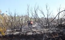 Bastia : Le feu à San Rucucciu
