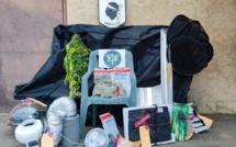 Cargese : il cultive son cannabis à domicile