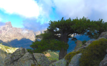 Météo de la semaine en Corse : un temps plutôt agréable mais venteux