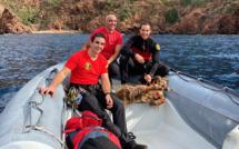 Les pompiers-montagnards de Corse-du-Sud au secours de la chèvre de Scandola
