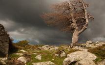 Tempête de vent : 110 Km/h dans le Cap Corse