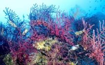 Plongée dans l'eau claire de Lavasina