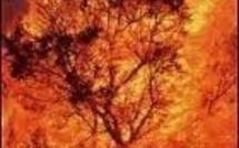 Risque d'incendies en Corse-du-Sud : Appel à la prudence