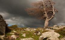 Avis de vents forts et d'orages violents : Appel à la vigilance et à la prudence