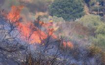 Incendies : Situation toujours tendue en Haute-Corse