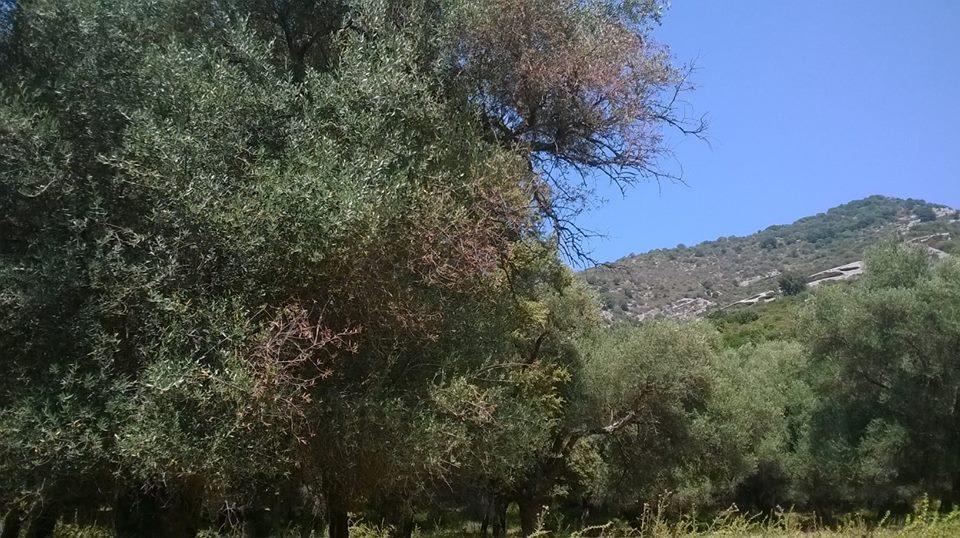 Domaine de Petricajola
